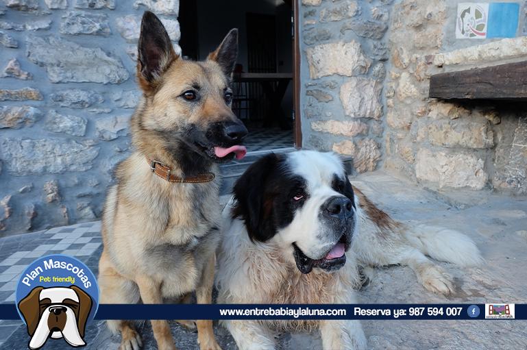 plan-mascotas_entrebabiaylaluna_001