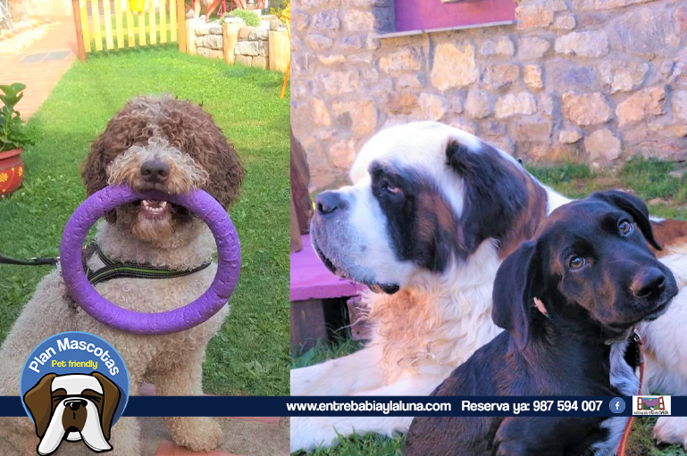 plan-mascotas_entrebabiaylaluna_002