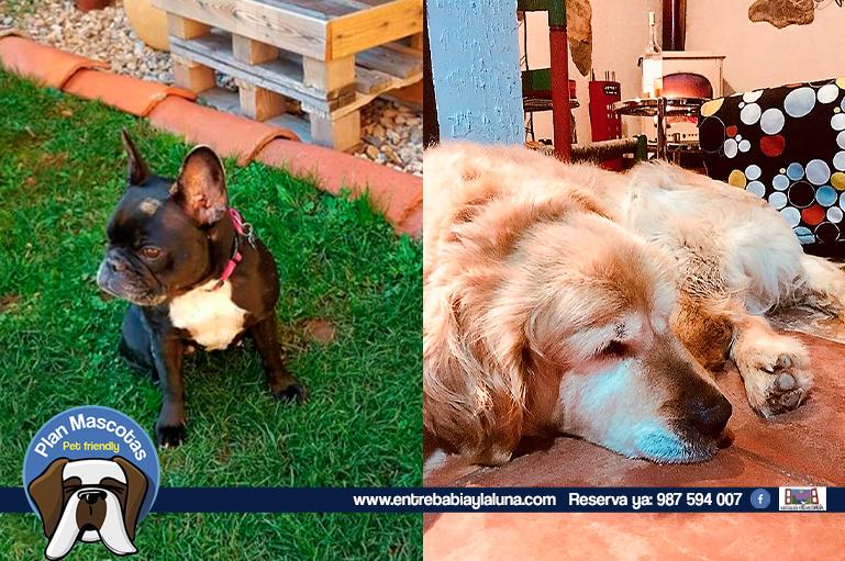 casa-rural-con-perro_entre-babia-y-la-luna_008